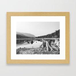 Sea of Stumps Framed Art Print