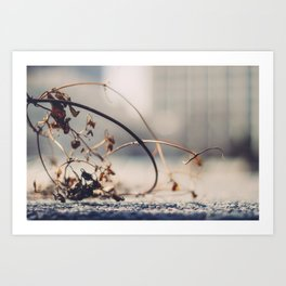 Winter Effects Art Print