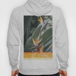 Bird of paradise Hoody