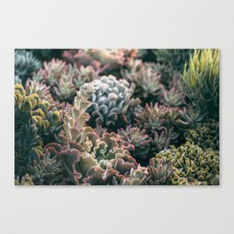 Mornings In The Succulent Garden #2 Canvas Print