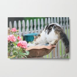 Kit Kat in the Fountain Metal Print