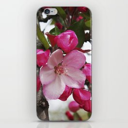 Spring blossoms - Strawberry Parfait Crabapple iPhone Skin