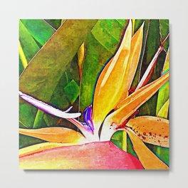 Bird of paradise flower macro Painting Metal Print