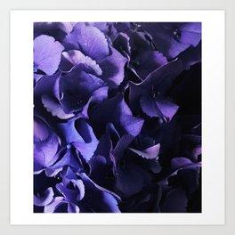 Hydrangea heaven Art Print