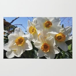 Sunny Faces of Spring - Gold and White Narcissus Flowers Rug