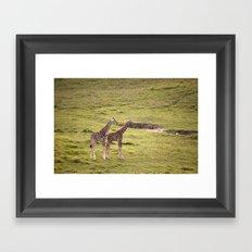 Young Giraffes Framed Art Print