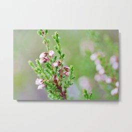 Heather flower Metal Print