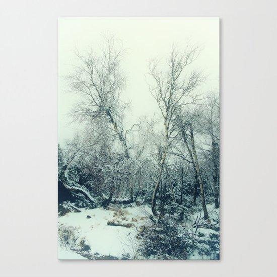 snow birch Canvas Print
