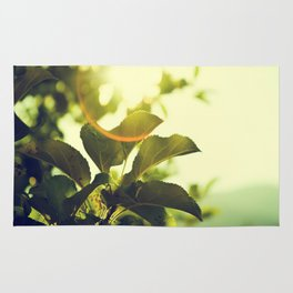 Morning Light Shining Through Branches Of Leaves Nature Photography Rug