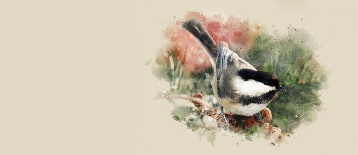 Chickadee Watercolor Art Coffee Mug