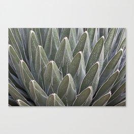 Agave Victoriae-Reginae Cactus Canvas Print