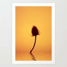 Golden Teazle Glow Art Print