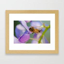Mr. Bee Framed Art Print