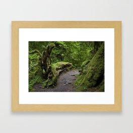 forest growth Framed Art Print