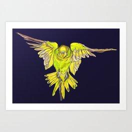 Flying Australian Budgie Bird Parakeet Art Print