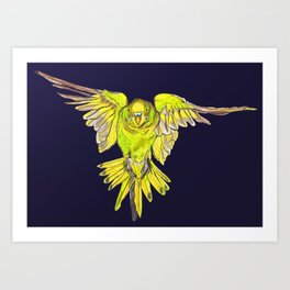 Flying Australian Budgie Bird Parakeet Art Print