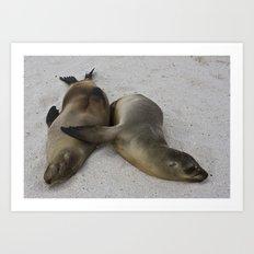 Galápagos Sea Lions Art Print