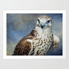 Saker Falcon Art Print