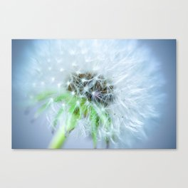 the blowball Canvas Print