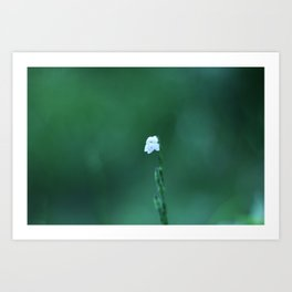 White In Green Art Print