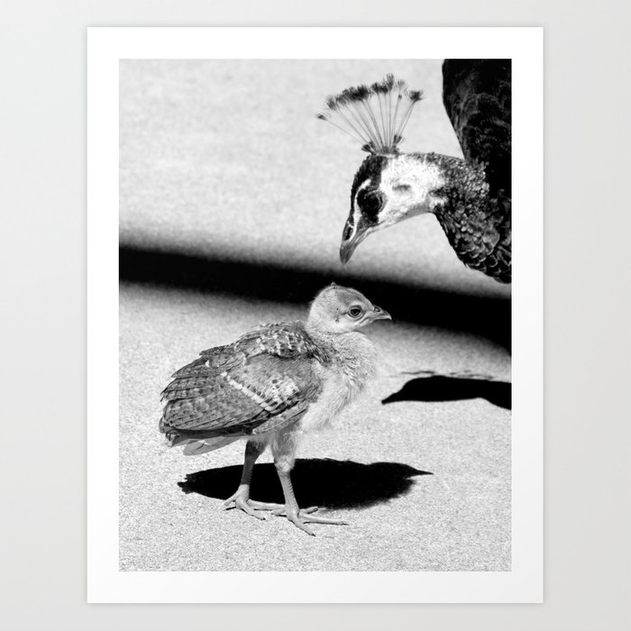 baby peacock Art Print