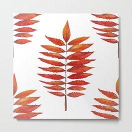 Staghorn sumac leaf | Feuille de sumac vinaigrier  Metal Print