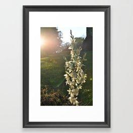 Dream of Sunlight Framed Art Print