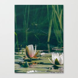 lily of the pond Canvas Print