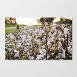 Cotton Field 3 Canvas Print