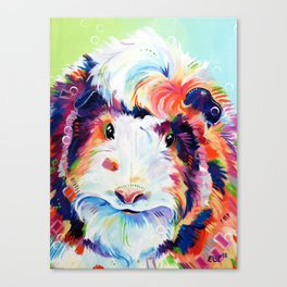 Abyssinian Guinea Pig in Color Canvas Print