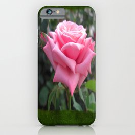 Pink Roses in Anzures 6 Blank P1F0 iPhone Case