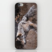 werewolf iPhone & iPod Skins featuring Werewolf by Monster Brand