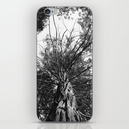 black and white forest iPhone Skin
