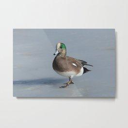 American Wigeon Duck Drake Metal Print