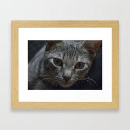 Pulce, Portrait n. 1 Framed Art Print