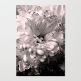 Black and White Chrysanthemum Canvas Print