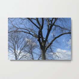 After Winter Trees Metal Print