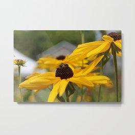 Bee on a Sunflower Metal Print