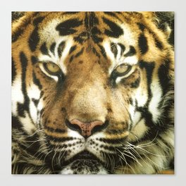 Face of Tiger Canvas Print