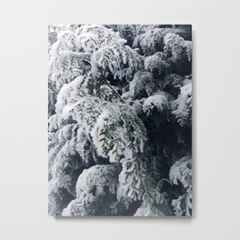 thuja brabant in the snow Metal Print