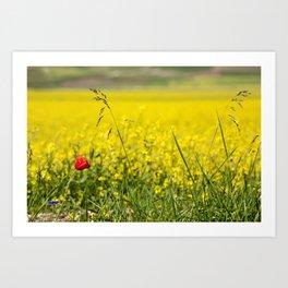 Red poppy in a yellow field Art Print