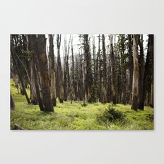 YELLOWSTONE FOREST Canvas Print