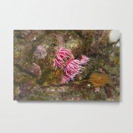 Hopkin's Rose Metal Print