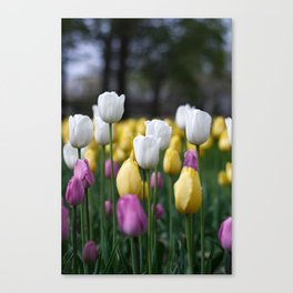 Tulip Gardens Canvas Print