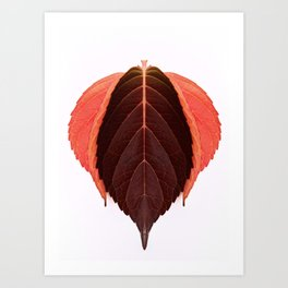 Red Autumn Leaves Art Print