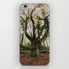 Forest Magic iPhone & iPod Skin