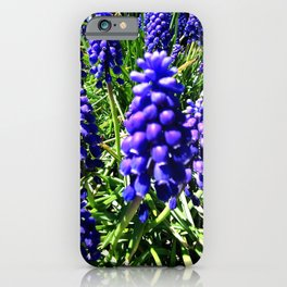 Grape Hyachinth 1 iPhone Case