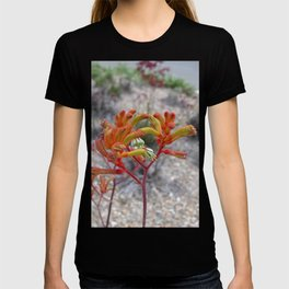 Orange Kangaroo Paw Flowers T-shirt