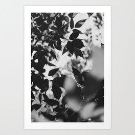 shade Art Print