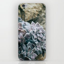 Botanical Gardens II - Succulents #557 iPhone Skin